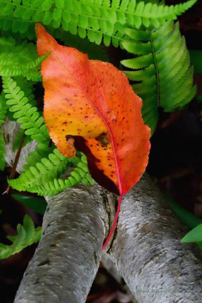 Wall Art - Photograph - Garden Charmer by Donna Blackhall