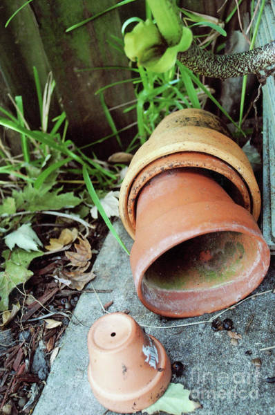 Photograph - Garden Clay Plant Pots by George D Gordon III