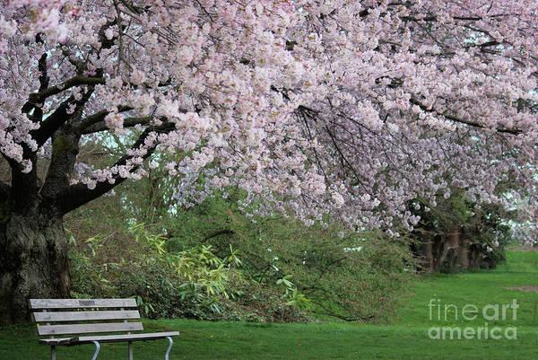 Photograph - Garden Corner by Victor K