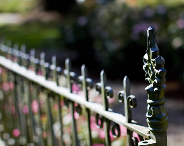 Iron Fence Wall Art - Photograph - Garden Fence by Rebecca Cozart