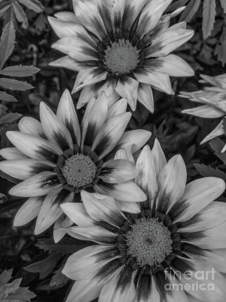 Photograph - Garden Flowers by Tony Baca
