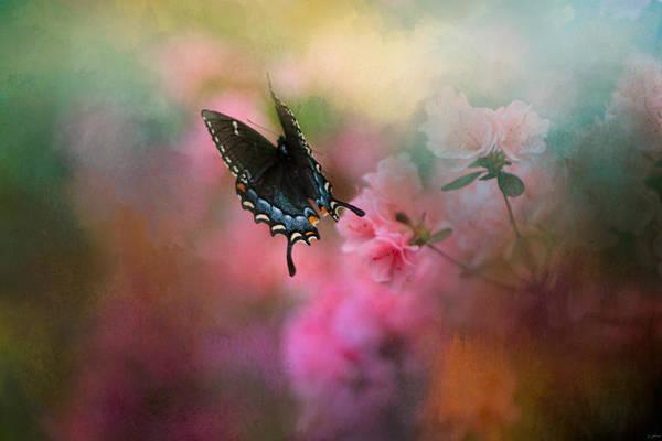 Photograph - Garden Friend 1 by Jai Johnson