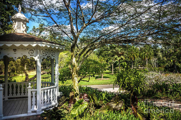 Photograph - Garden Gazebo 9683 by Carlos Diaz