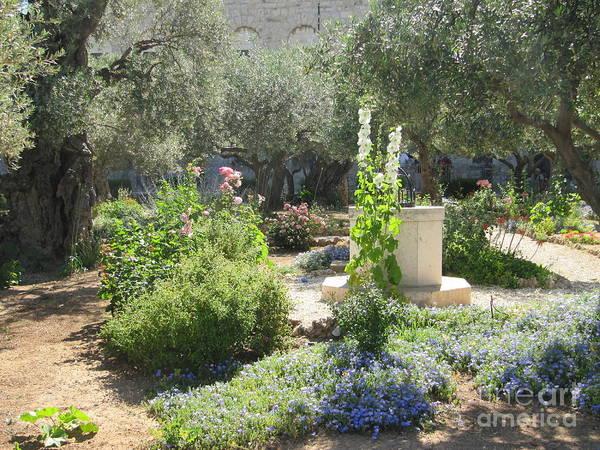 Photograph - Garden Gethsemane by Donna L Munro