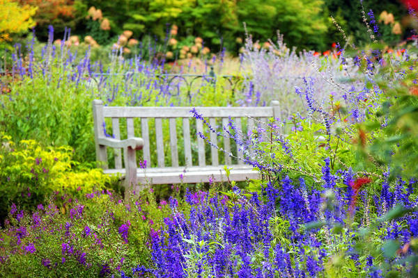 Respite Photograph - Garden Gifts by Jessica Jenney
