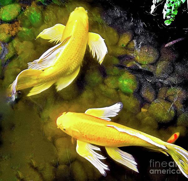 Photograph - Garden Goldenfish by James Fannin