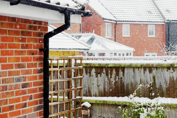 Wall Art - Photograph - Garden In The Snow by Tom Gowanlock