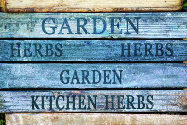 Photograph - Garden Kitchen Herbs by Tim Gainey