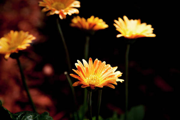 Photograph - Garden Light by Eric Christopher Jackson