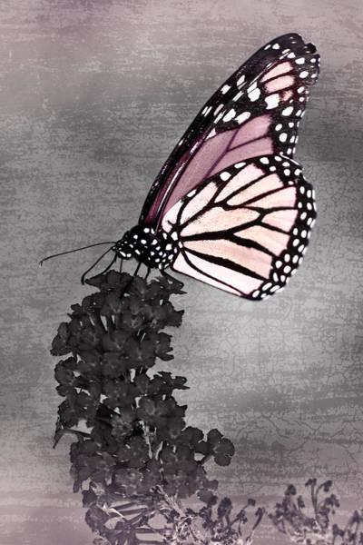 Photograph - Garden Monarch Mystery by Leda Robertson