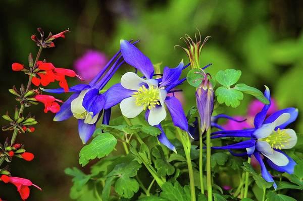 Photograph - Garden Nectar by Lynn Bauer