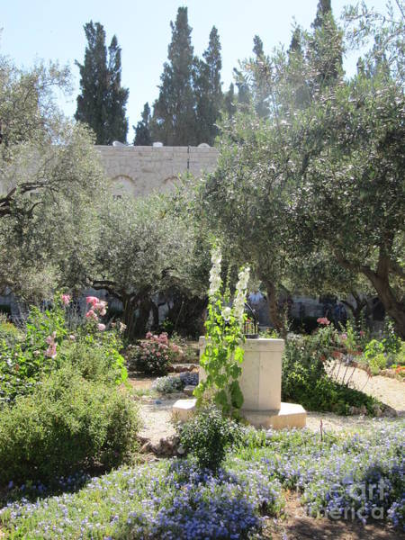 Photograph - Garden Of Gethsemane by Donna L Munro