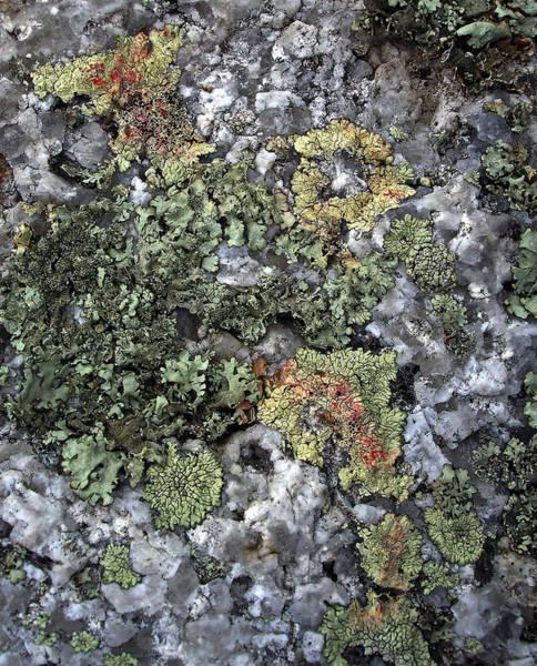 Photograph - Garden Of Lichen And Granite by Lynda Lehmann