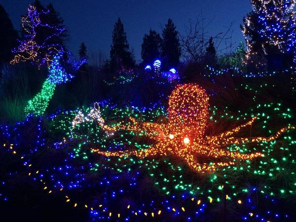 Christmas In Octopus Garden >> Octopus Garden Art Fine Art America