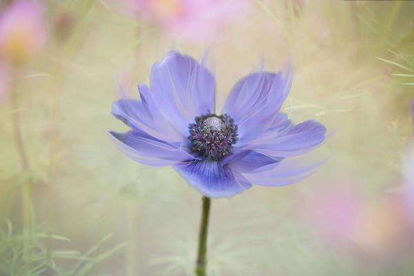 Photograph - Garden Of My Dreams. by Usha Peddamatham