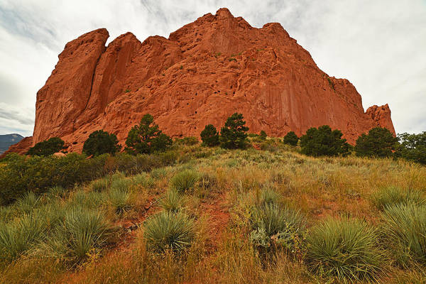 Photograph - Garden Of The Gods Plants Colorado Springs Manitou by Toby McGuire