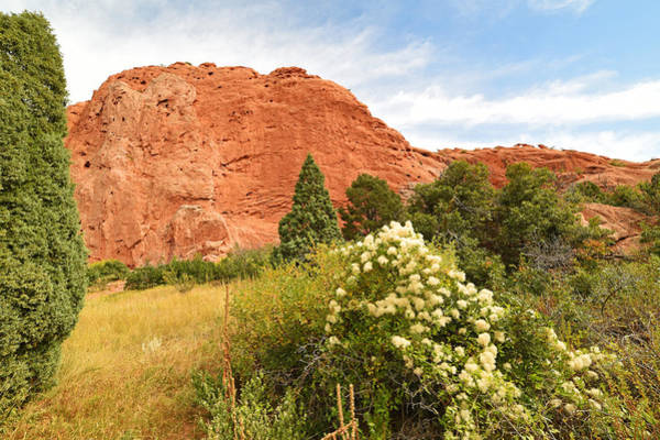 Photograph - Garden Of The Gods Rock Cotton Plant by Toby McGuire