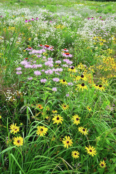 Photograph - Garden Of Wildflowers In Moraine Hills Sp by Ray Mathis
