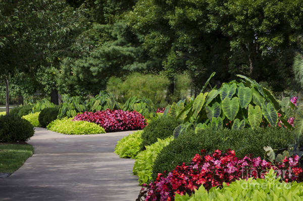 Photograph - Garden Path by Andrea Silies