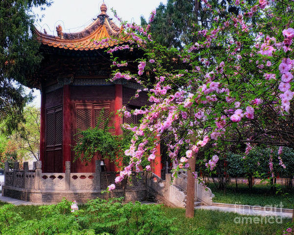 Wall Art - Photograph - Garden Pavilion And Cherry Blossom by George Oze