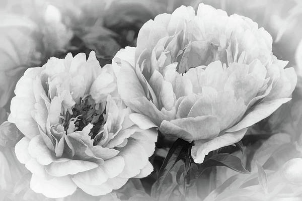 Photograph - Garden Peonies by Leda Robertson