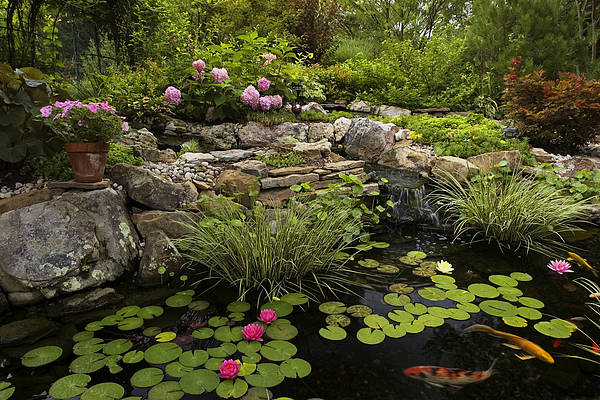 Water Lillies Photograph - Garden Pond - D001133 by Daniel Dempster