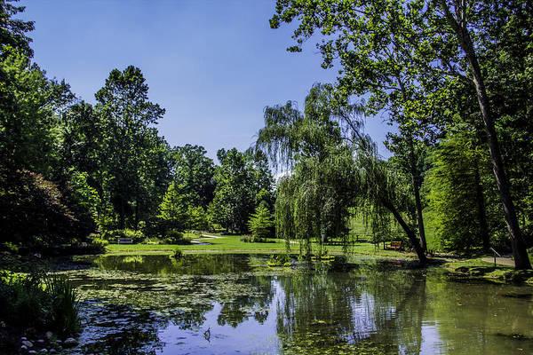 Photograph - Garden Pond by Allen Nice-Webb