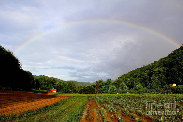 Photograph - Garden Rainbow by Allen Nice-Webb