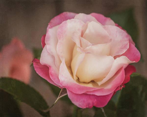 Photograph - Garden Rose 8739 by Teresa Wilson