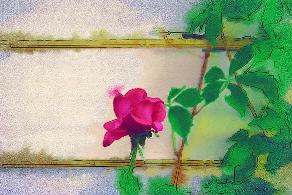 Holly Digital Art - Garden Rose by Holly Ethan