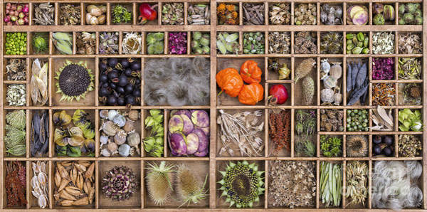 Wall Art - Photograph - Garden Seed Pods by Tim Gainey