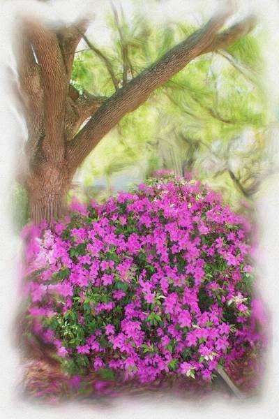 Photograph - Garden Series 0912 by Carlos Diaz