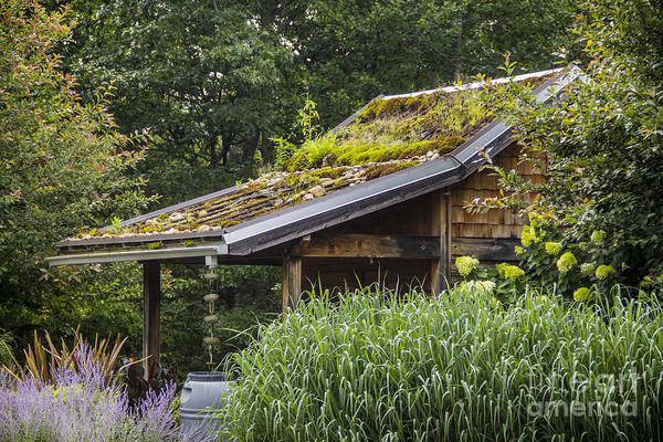 Photograph - Garden Shed by Allen Nice-Webb