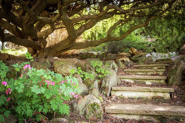 Photograph - Garden Steps by Terry DeLuco