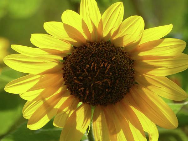 Photograph - Garden Sunshine by Cris Fulton