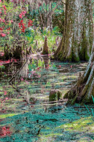 Wall Art - Photograph - Garden Swamp by Drew Castelhano