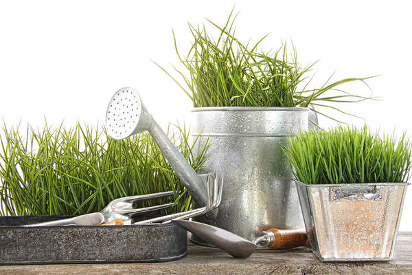 New Beginnings Photograph - Garden Tools And Watering Can With Grass by Sandra Cunningham
