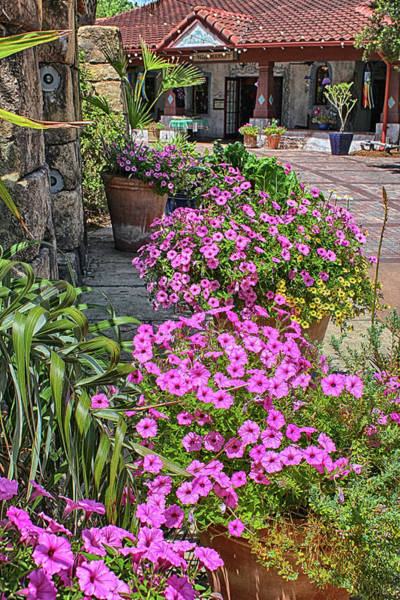 Photograph - Garden View Series 54 by Carlos Diaz
