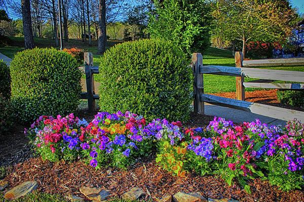 Photograph - Garden View Series 56 by Carlos Diaz