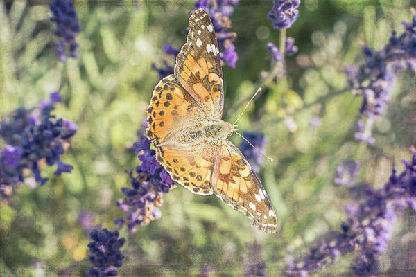 Photograph - Garden Visitor by Jennifer Grossnickle