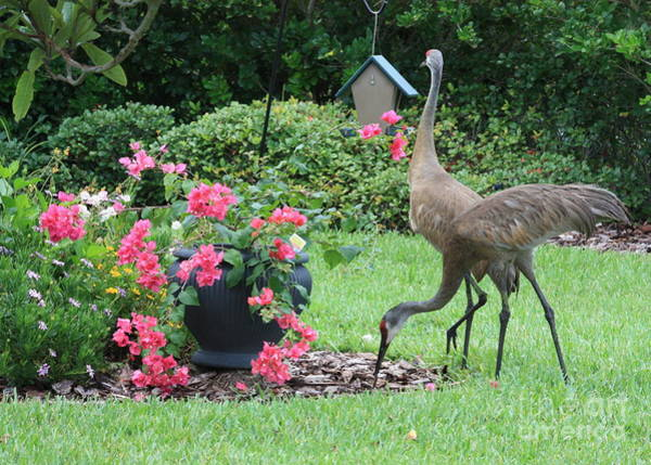 Wing Back Photograph - Garden Visitors by Carol Groenen