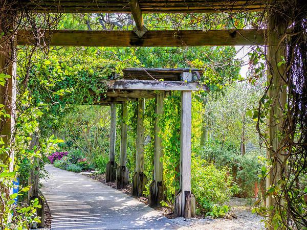 Photograph - Garden Walk Under The Trellis by Robin Zygelman