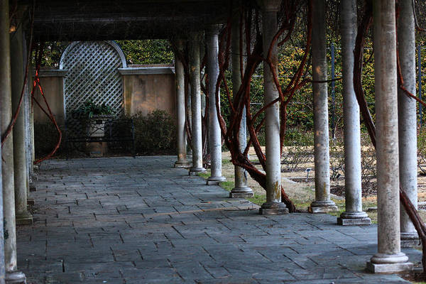 Wall Art - Photograph - Garden Walkway by Kevin Wheeler