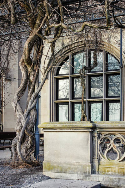 Photograph - Garden Window And Vines by Todd Blanchard