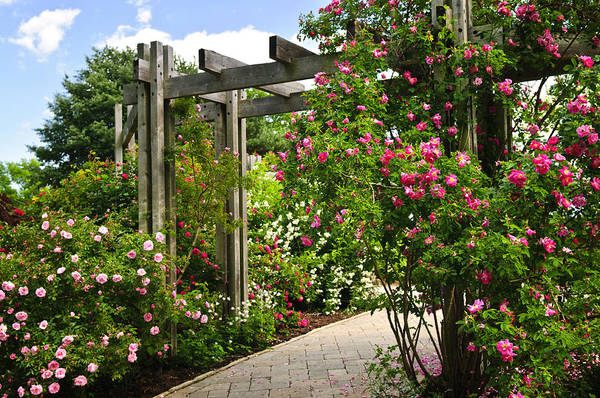 Arbor Photograph - Garden With Roses by Elena Elisseeva