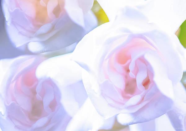 Lightner Museum Photograph - Gardenia Scent by Janal Koenig