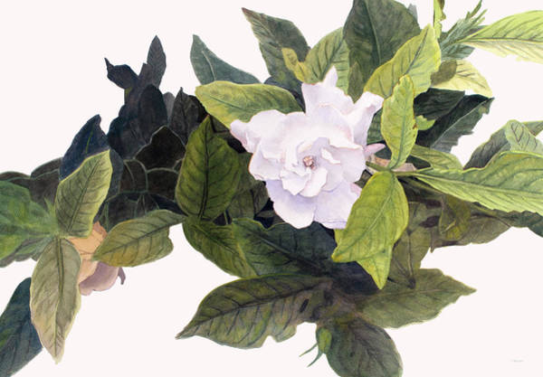 Painting - Gardenias by Christopher Reid