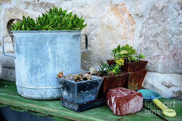 Photograph - Gardening Pots And Small Shovel Against Stone Wall In Primosten, Croatia by Global Light Photography - Nicole Leffer