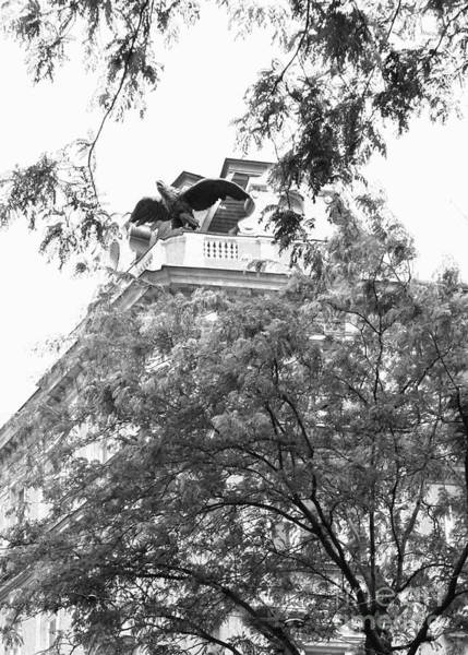 Photograph - Gargoyle Perched In Black And White by Angela Rath