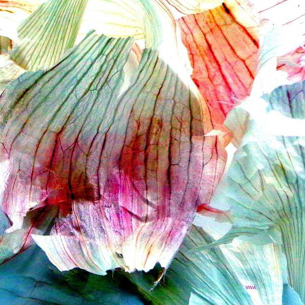 Photograph - Garlic  Abstract   Series by VIVA Anderson